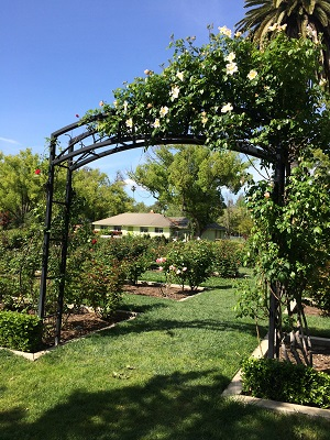 Picture of McKinley Park Rose Garden - Arch With Climbing Roses