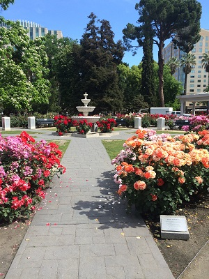 Picture of State Capitol Park World Peace Rose Garden