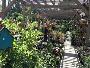 Picture of interior of Talini's Nursery & Garden Center
