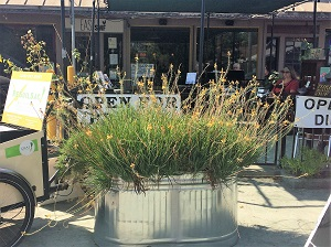 Picture of East Sacramento Edible Garden Tour garden