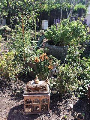 Picture of East Sacramento Edible Gardens Tour - Local Roots
