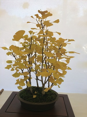 Picture of Bonsai at Shepard Garden and Arts Center Show & Sale