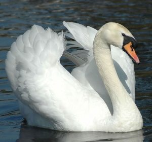 Picture of a SWAN - Sacramento Women's Action Network