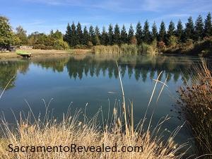 Photo of GoatHouse Brewing Company Pond