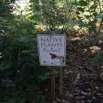 Photo of Native Plants Live Here sign