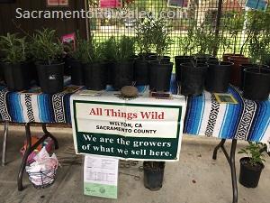 Photo of Shepard Garden & Arts Center Spring Sale