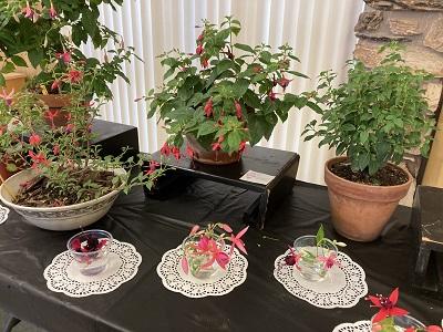 Photo of Sacramento Fuchsia Garden Club Display