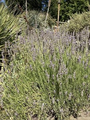 Photo of WPA Rock Garden Plnats