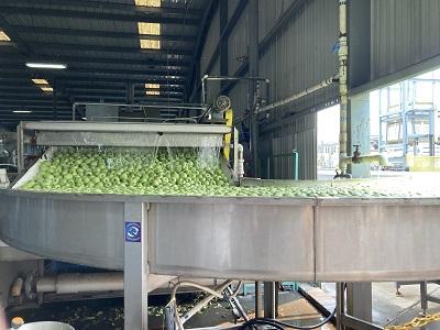 Photo of Greene & Hemly apple packing equipment